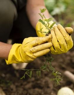 Técnico en jardinería