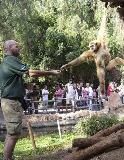 cuidador zoológico